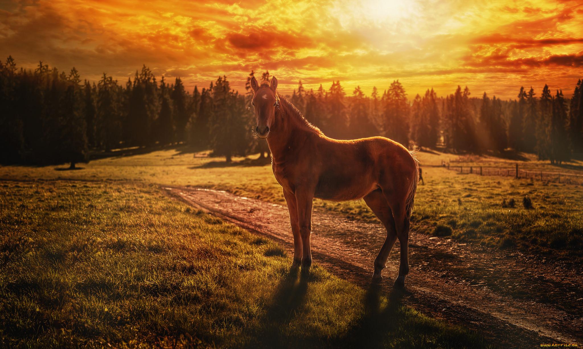 Картинка уходящей лошади